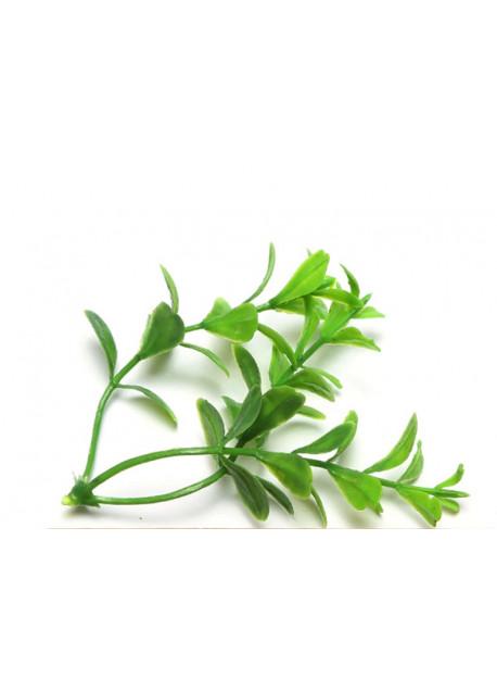 Lover groen overzet